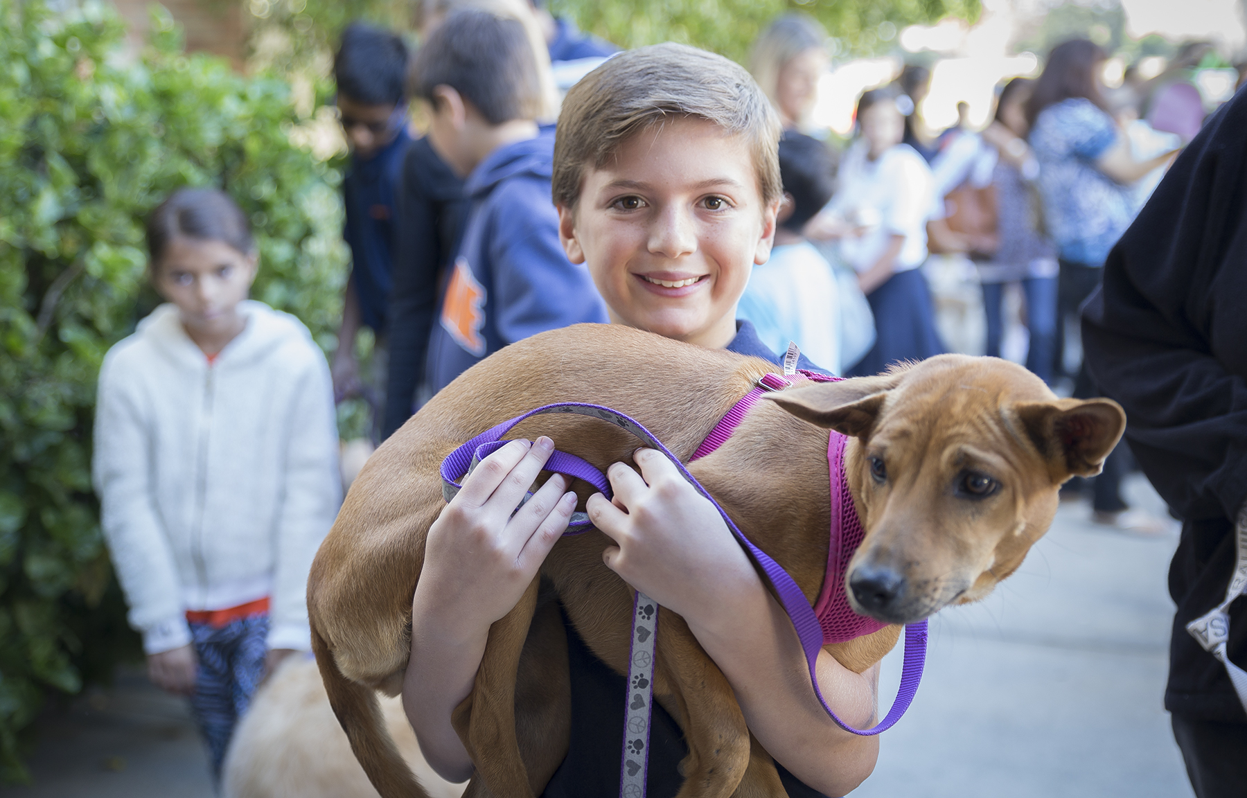 Chaminade Holds Blessing of the Animals | CHAMINADE NEWS
